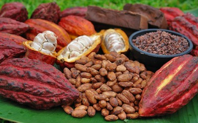 What Are Cacao Nibs?